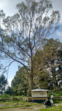 En busca de mi árbol